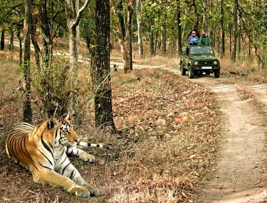 Kanha Bandhavgarh Tour 9 days