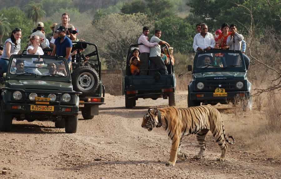 Jeep Safari Ranthambore