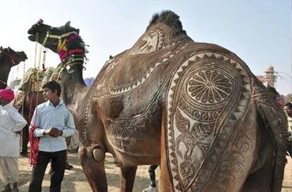 Pushkar fair dates