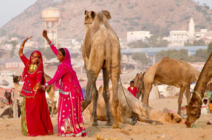 pushkar cattle fair