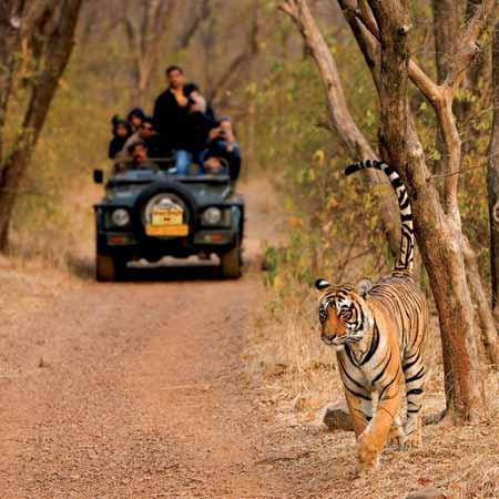 Ranthambore Tour Travel Trips