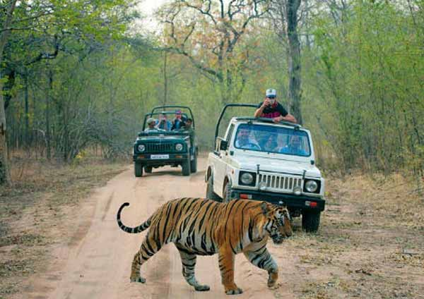 Ranthambhore Jaipur Tour 4 Days