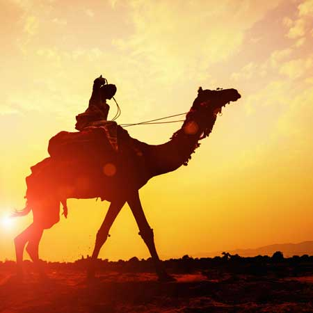 Jaisalmer Activities