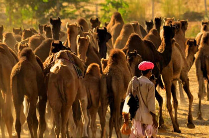 Pushkar Fair Guidelines